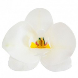 10 orchidée en azyme