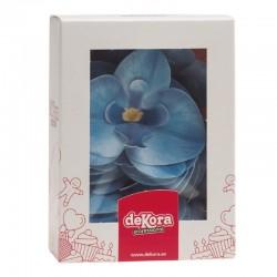 10 orchidées bleues en azyme